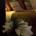 Jasmijn kamer